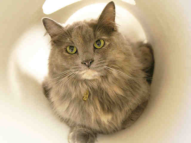 """Maggie is described as being a """"good cat who has learned a lot in the short time that (she) have been on this earth.""""  She al"""