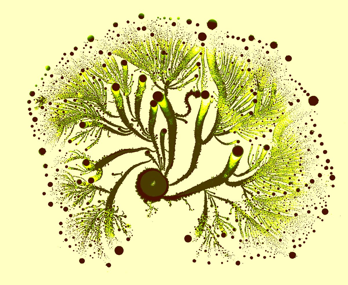 "Vortex Green 2  <a href=""http://tamar.tau.ac.il/~eshel/"" target=""_blank"">Eshel Ben-Jacob</a>"