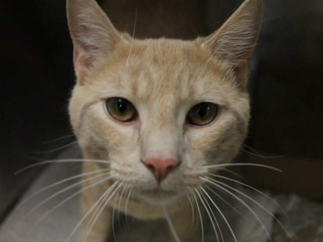 Leon loves to give head rubs, and will also fall asleep in your arms while being held. This adorable boy is only about two ye