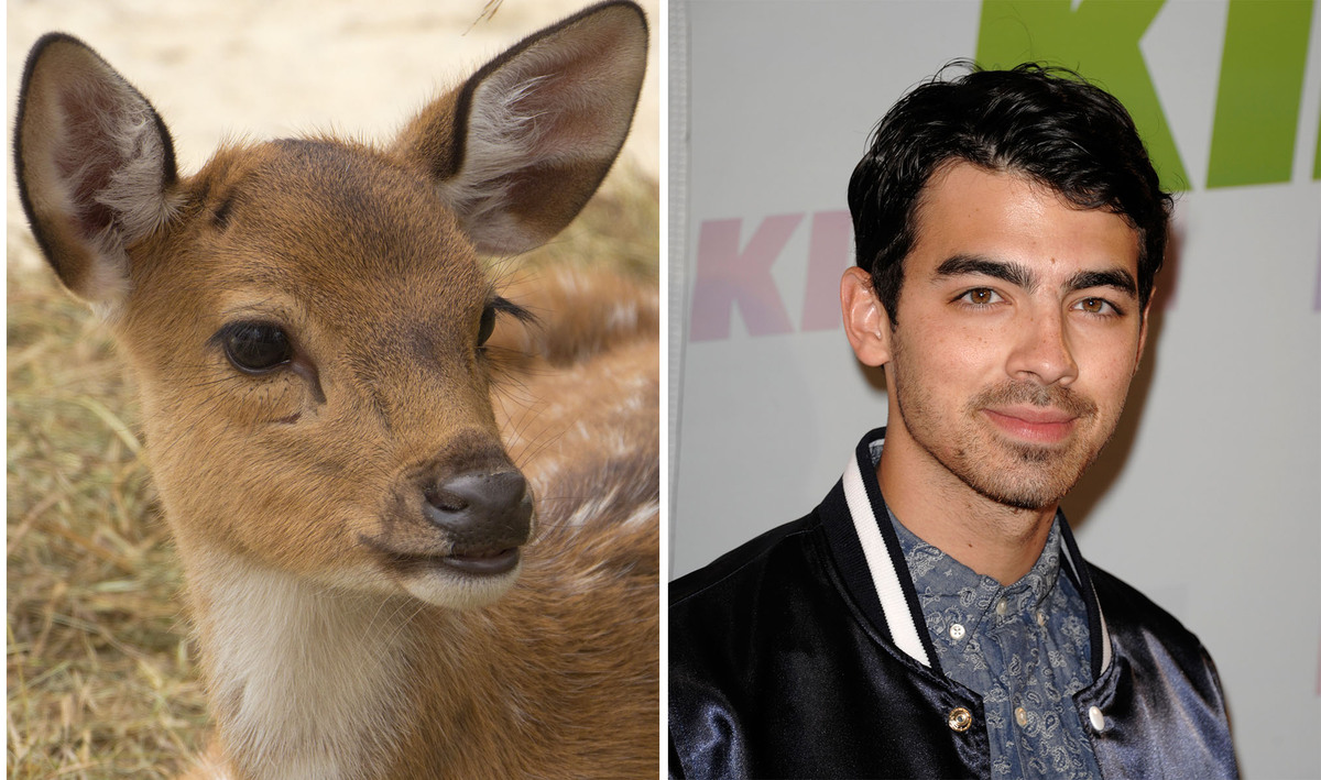 The resemblance Joe Jonas has to Bambi is uncanny. So adorable.