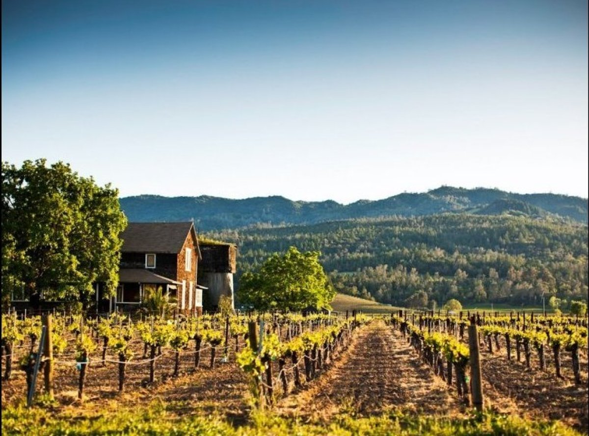 <strong>WHAT NOT TO DO IN NAPA</strong>