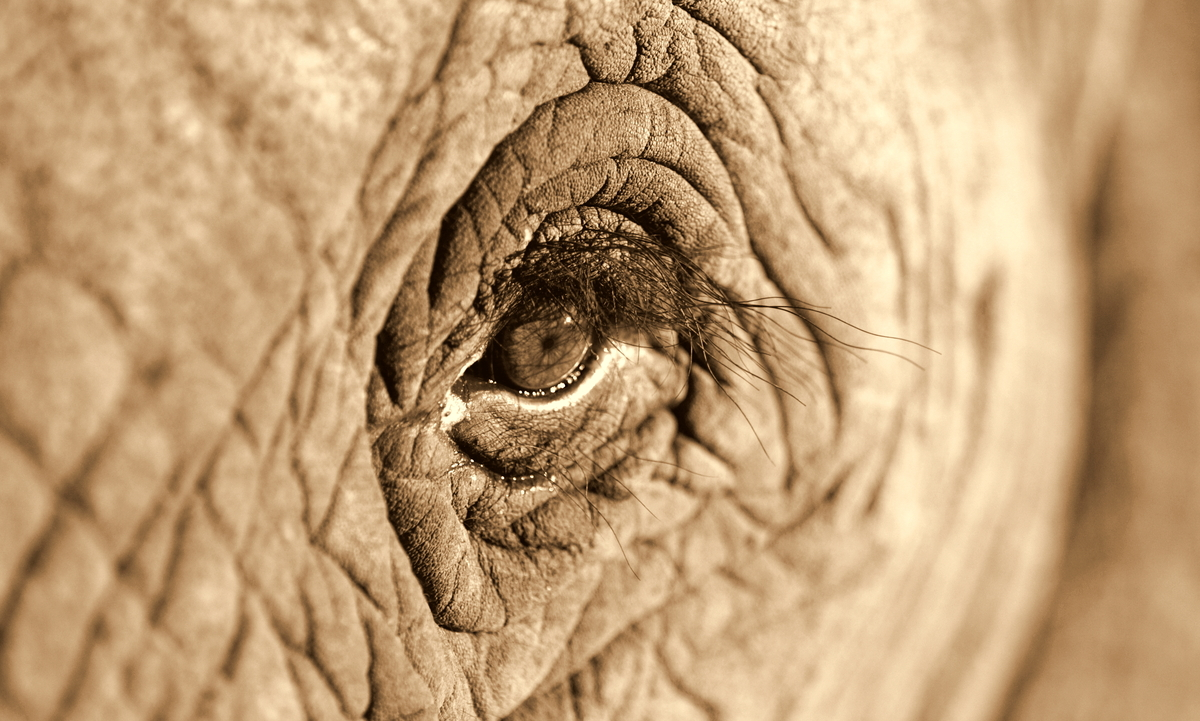 "Elephants are some of the most intelligent animals on Earth. <a href=""http://listverse.com/2012/03/05/top-10-facts-about-elep"
