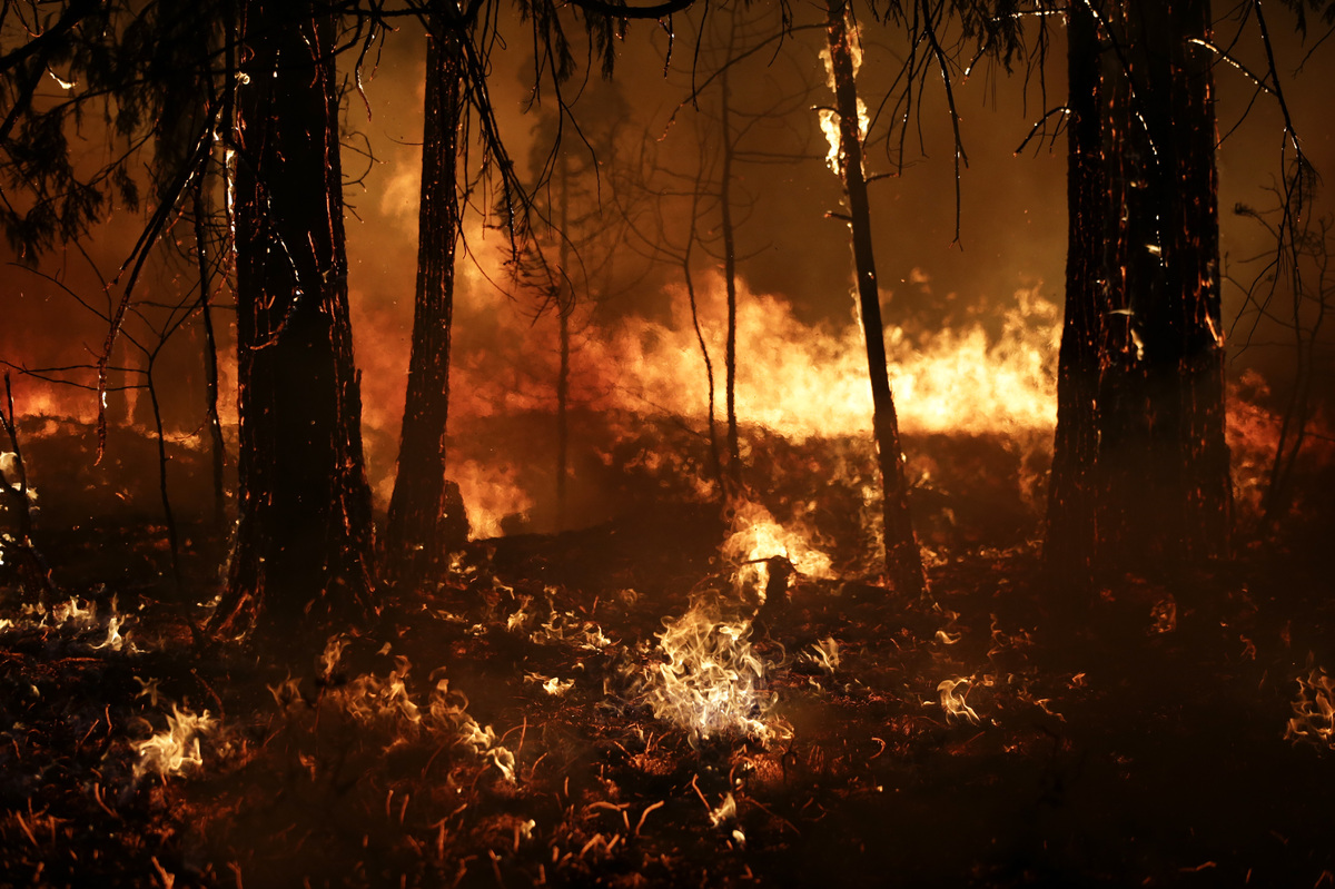 Trees burn in a burnout fire as firefighters continue to battle the Rim Fire near Yosemite National Park, Calif., on Sunday,
