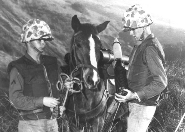 """<a href=""""http://www.vetstreet.com/our-pet-experts/semper-fi-equine-sister-in-arms"""" target=""""_blank"""">Staff Sgt. Reckless</a>, a"""