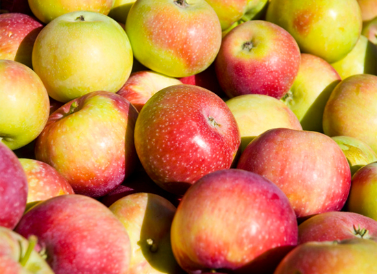 We don't think of apples as having a season, but in the Northern Hemisphere, apples are typically harvested in late summer an
