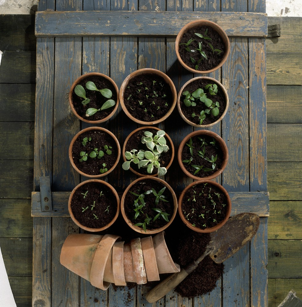 If you're just starting out with gardening, try your hand at growing a few fresh herbs first. Dill, mint, rosemary, basil, an