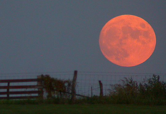 Harvest moon rises over a fence.