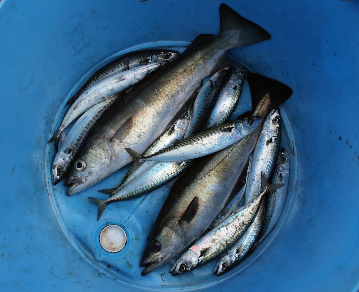 Frozen fish sometimes feels dry and gross. It can acquire a metallic, frozen flavor that isn't very much fun, and it's hard t