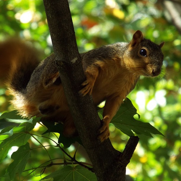 Yale students were worried this fall that their campus squirrels were the victims of a mass killing by school officials, but