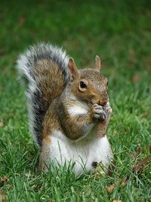 "The<a href=""https://www.facebook.com/pages/Squirrels-of-Wash-U/127465624111524"" target=""_blank""> Squirrels of Wash U Facebook"