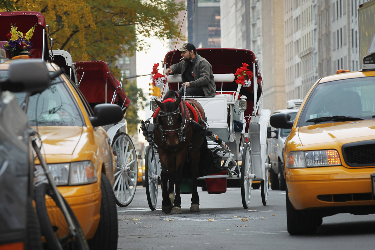 NEW YORK, NY - NOVEMBER 14:  A carriage horse is viewed in traffic beside Central Park on November 14, 2011 in New York City.