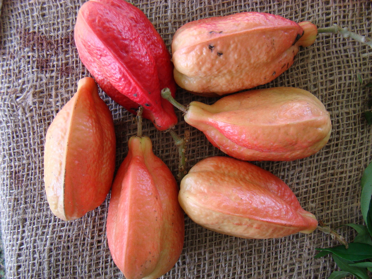 Herbalife weight loss in jaipur