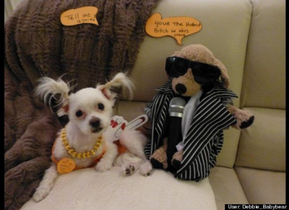 Pet Halloween Costumes & 25 Pet Halloween Costumes That Are So Cute We Canu0027t Even | HuffPost