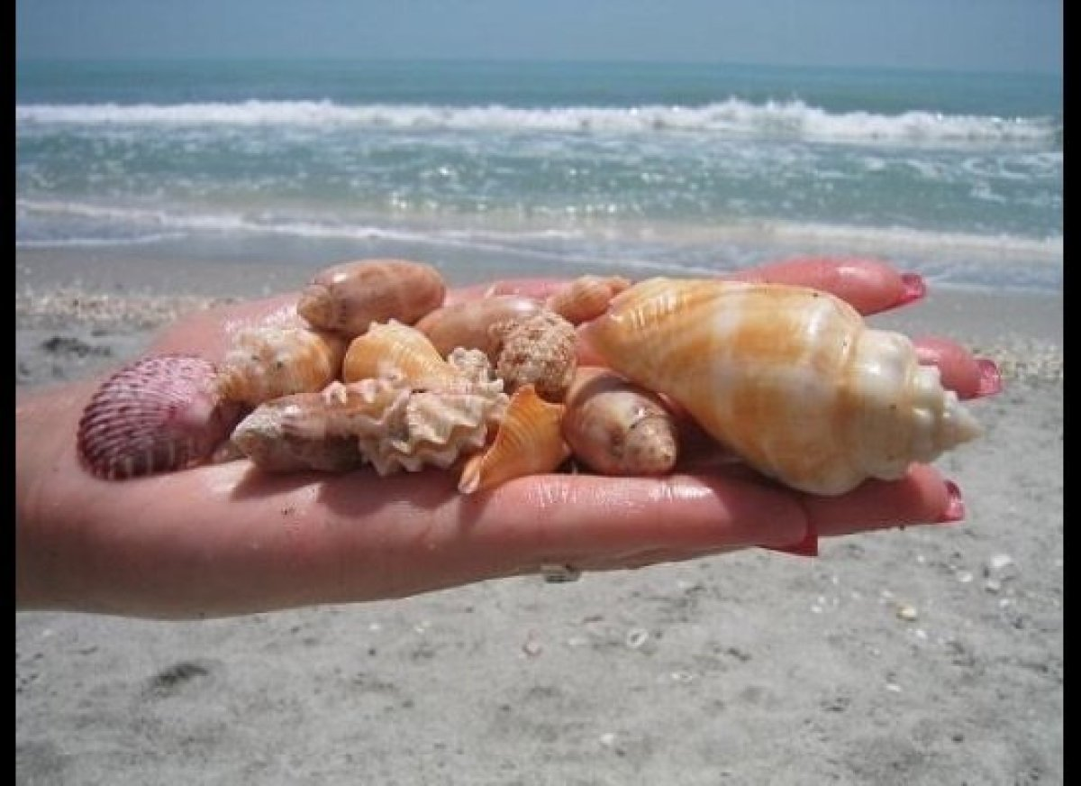 Sanibel Island is the perfect place to scoop up shells.  <strong>Photo courtesy of VISIT FLORIDA</strong>
