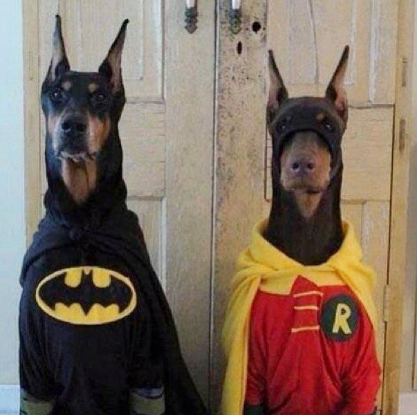5 batman u0026 robin dogs
