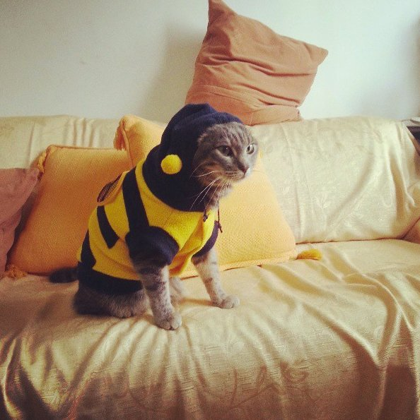 "<a href=""http://instagram.com/p/XhsXQULLS2/"" target=""_blank"">This is a bee cat</a>."