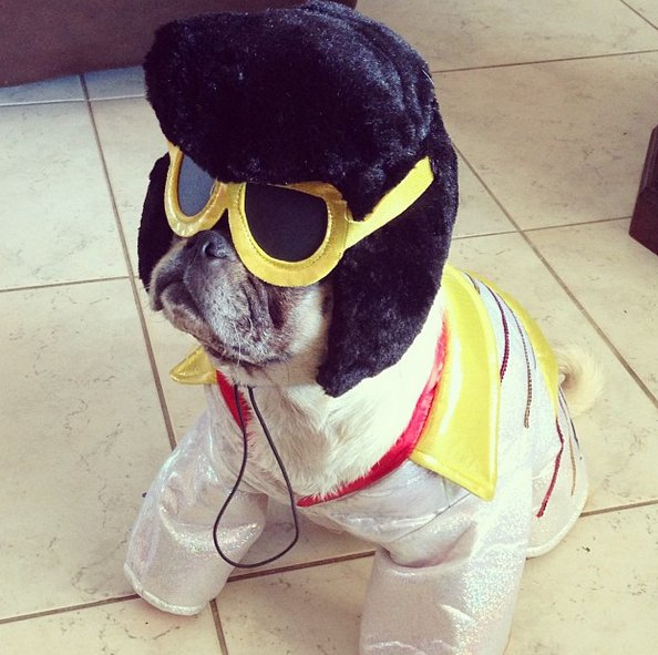 "<a href=""http://instagram.com/p/fX9wgMTZ7I/"" target=""_blank"">Pug does rock & roll</a>."