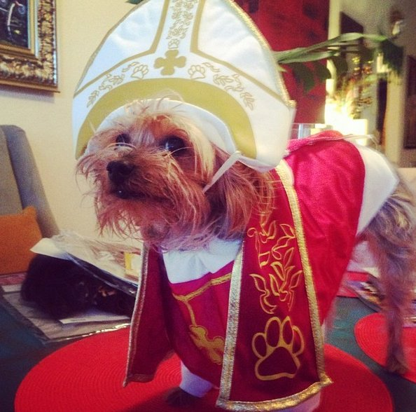 "<a href=""http://instagram.com/p/e6IJP0GQuA/"" target=""_blank"">Pup as pope</a>."