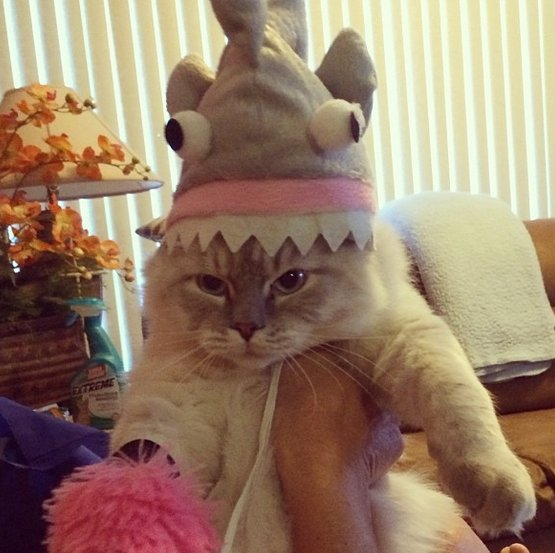 "<a href=""http://instagram.com/irisrucel"" target=""_blank"">Cat as shark</a>."