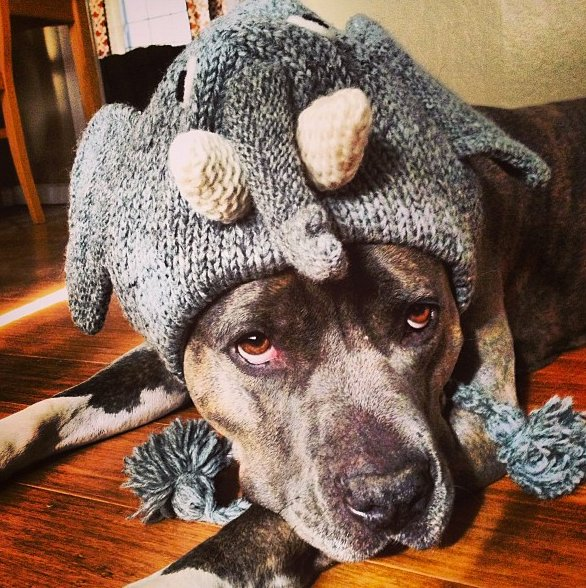 "<a href=""http://instagram.com/sundays_with_roo"" target=""_blank"">Roo the dog</a> may not be all that thrilled with this elepha"