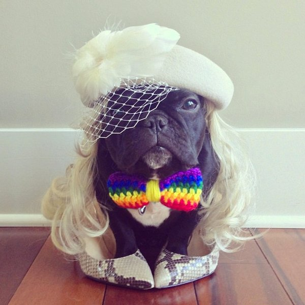 "Championing his LGBT friends, <a href=""http://instagram.com/p/bCj73zPJs8/"" target=""_blank"">Trotter the French bulldog is a vi"