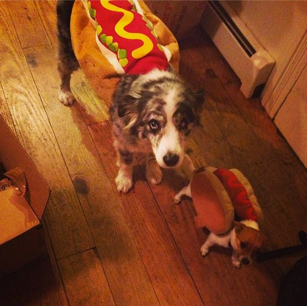 "<a href=""http://instagram.com/p/e_TtWPtzK4/"" target=""_blank"">Hot dog dogs</a>!"