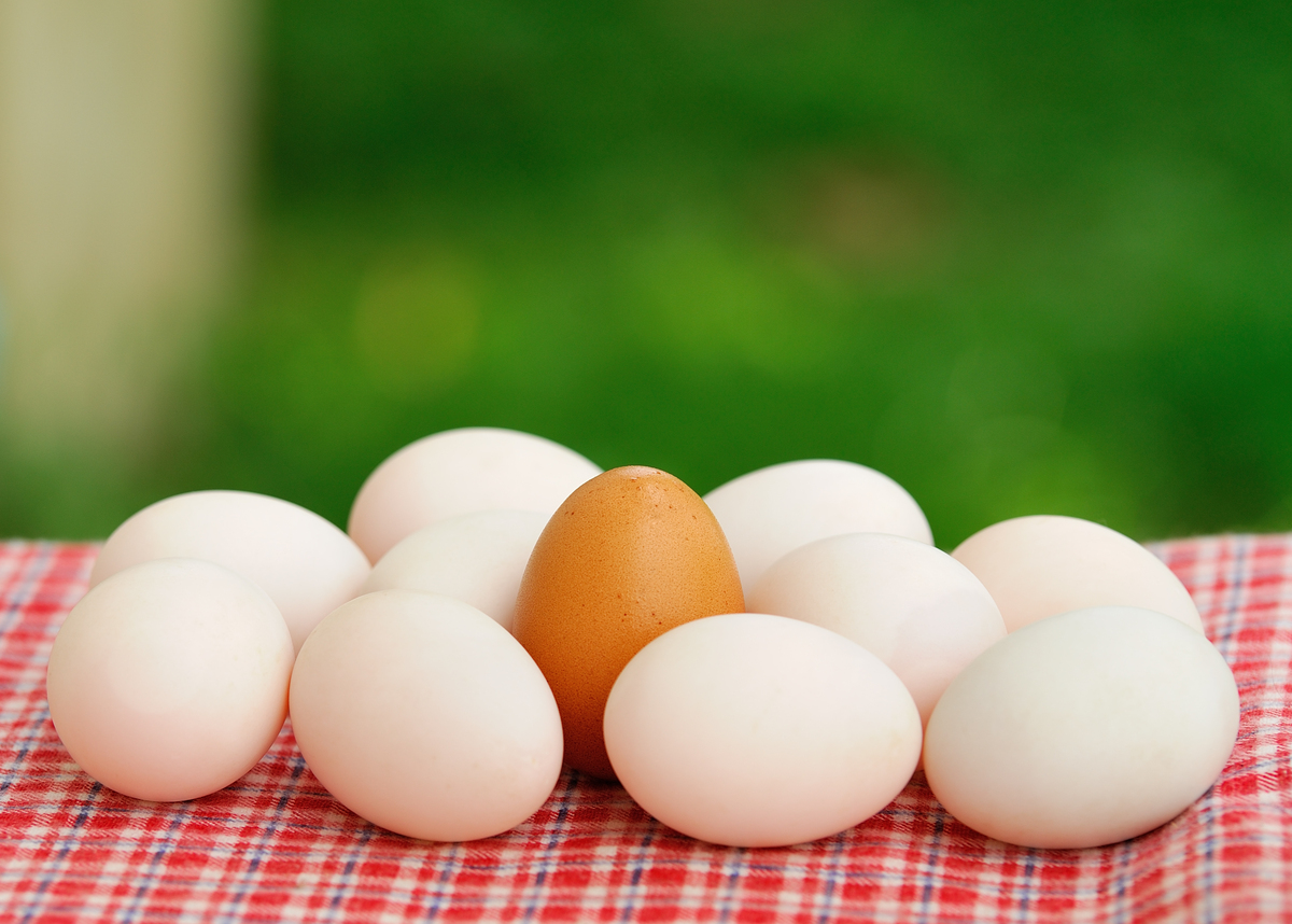Although eggs have been occasionally targeted for their high cholesterol content, they are full of essential nutrients and pr