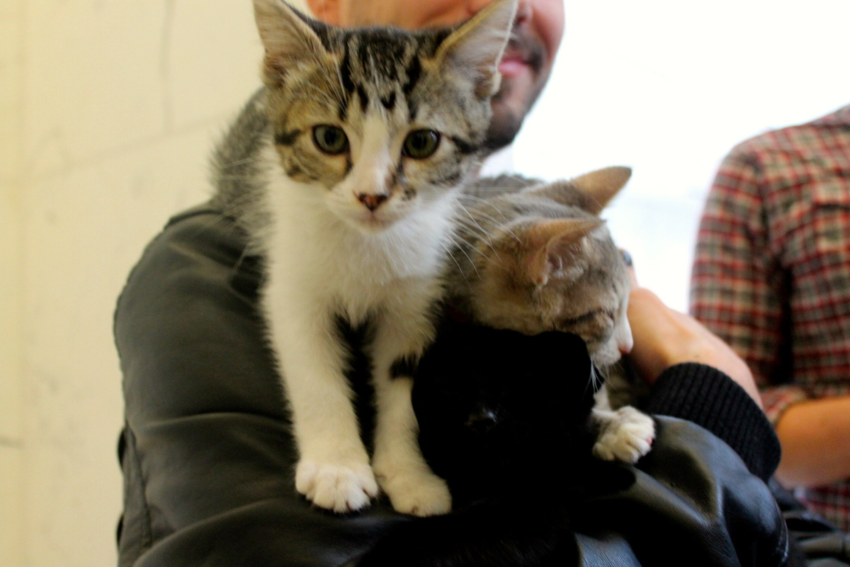 Uber kitten Dime from the San Francisco SPCA strikes a pose for HuffPost.