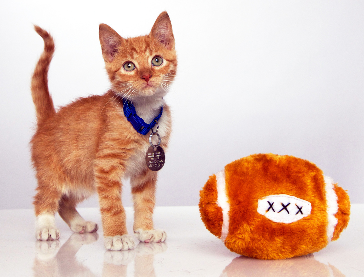 """<a href=""""http://www.hallmarkchannel.com/kittenbowl"""">First Annual Kitten Bowl</a>"""