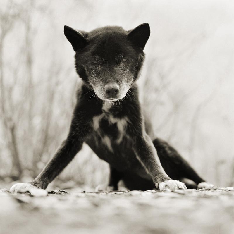 "<a href=""http://isaleshko.com/elderly-animals/"" target=""_blank"">Crédit: Isa Leshko</a>"