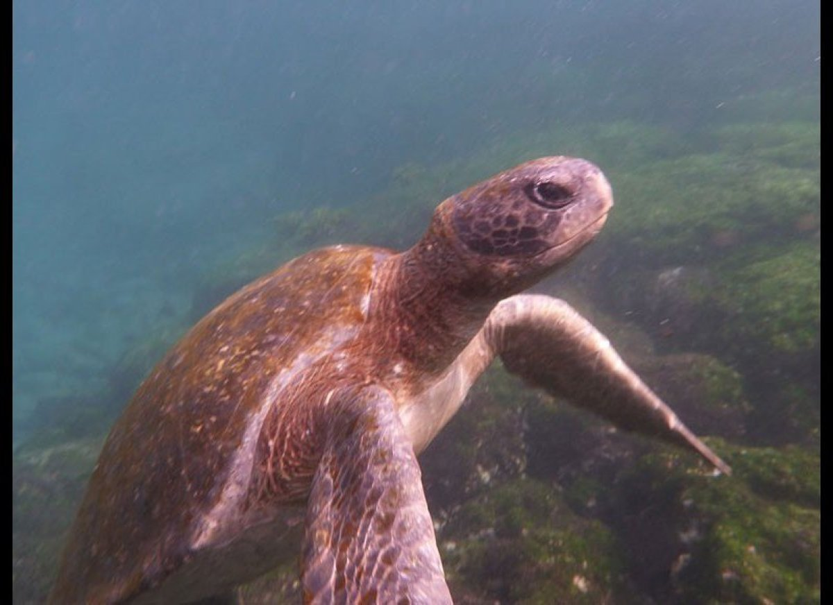 The Galapagos Islands teem with giant tortoises, marine lizards, masked boobies and other natural marvels. No wonder the Ecua