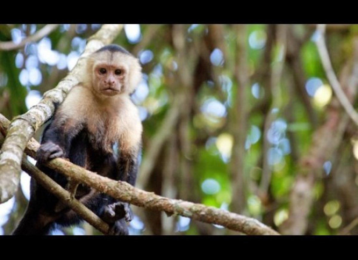 Costa Rica is one of the most biodiverse countries on earth, and the Osa Peninsula is by far its wildest region. Sloths and m