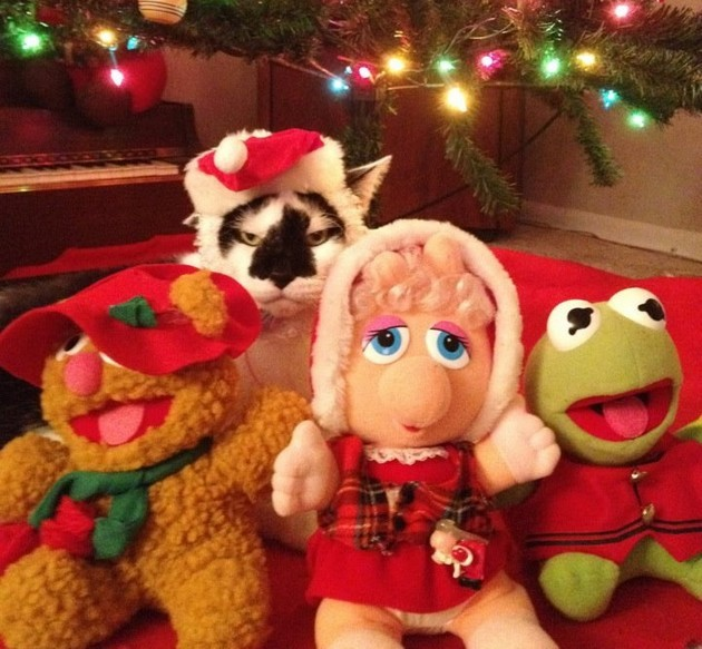 50 Pets In Christmas Costumes That Will Get You In The Holiday ...