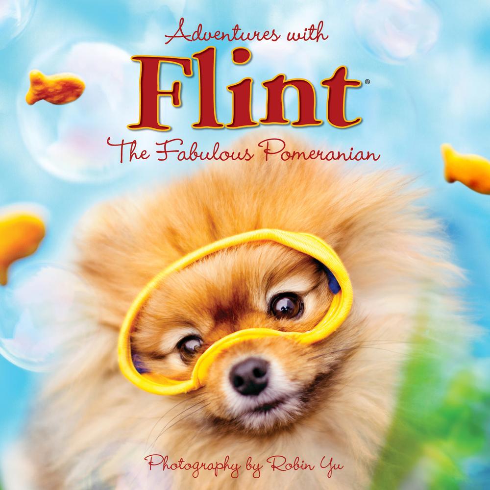 """Flint The Pomeranian Is Your New Favorite Dog (Robin Yu/<a href=""""http://www.flintthepomeranian.com/"""">FlintThePomeranian.com</"""