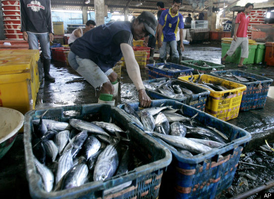 "Many marine scientists <a href=""http://www.oceanconservancy.org/site/PageServer?pagename=issues_overfishing"" target=""_hplink"""
