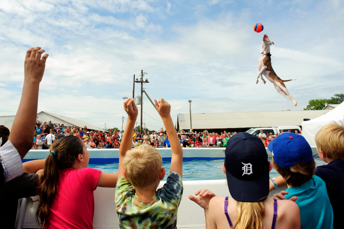 Mee-ha, a Pit bull mix, jumps into a pool of water catching a ball in midair, as part of The Marvelous Mutts traveling show a