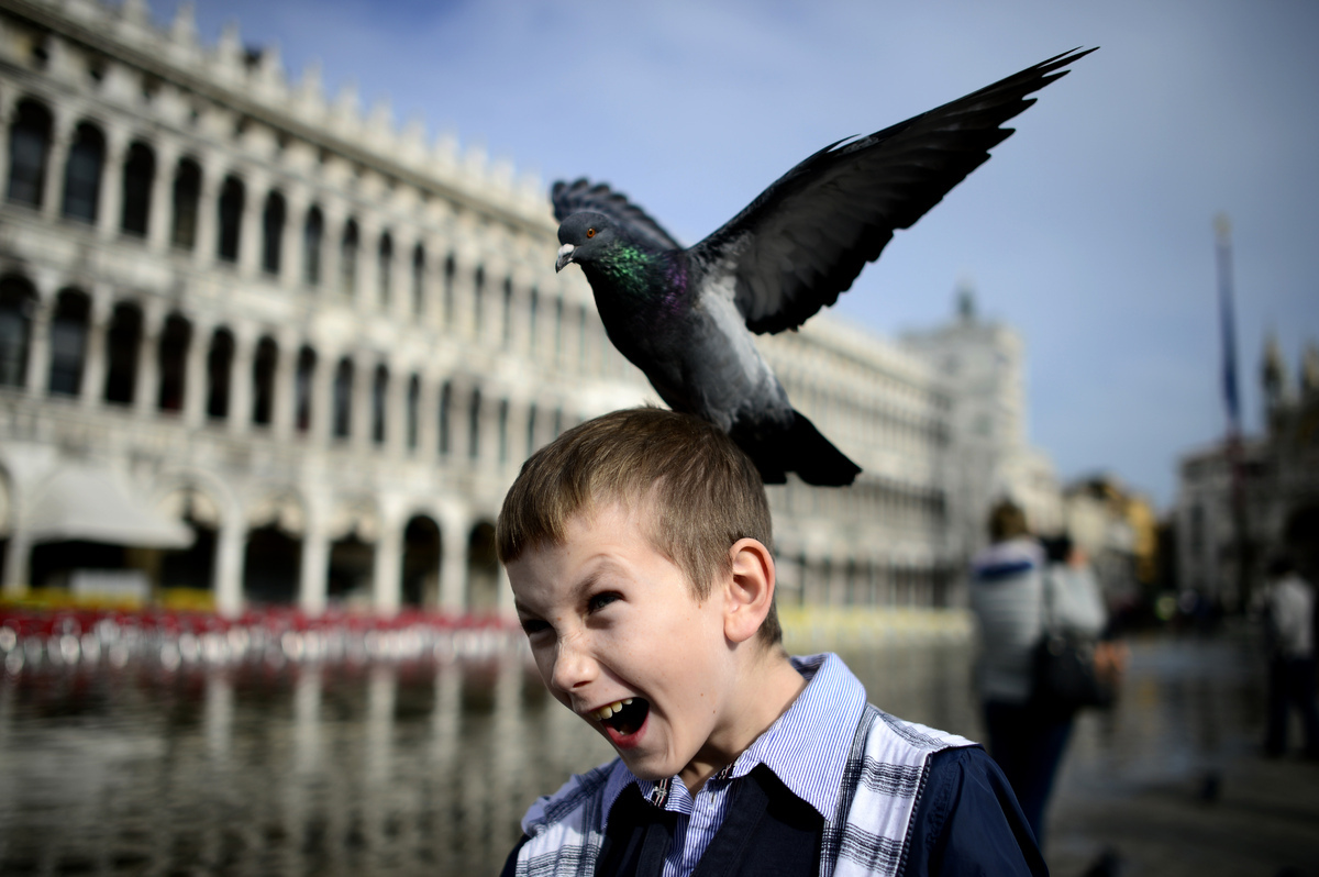 A pigeon lands on a boy's head in the flooded Piazza San Marco (Saint Mark's Square) on November 4, 2013 in Venice. Saint Mar