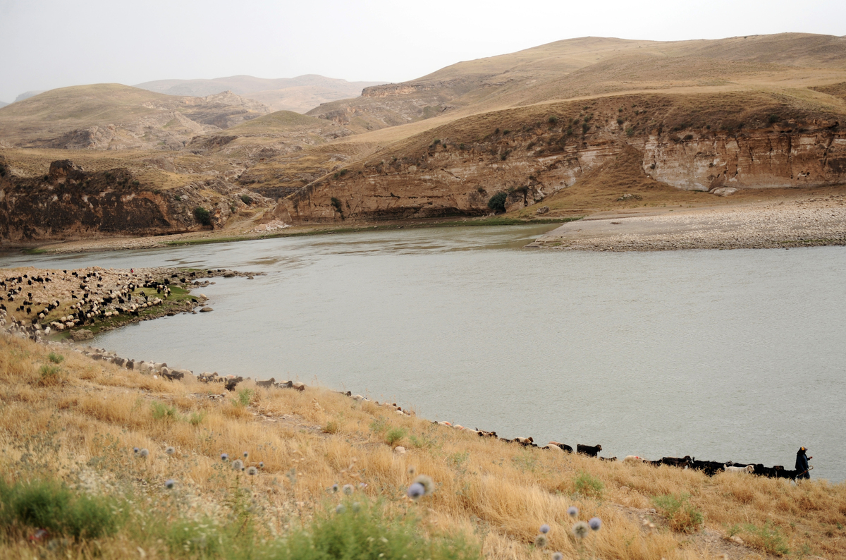 A shepherd walks in front of his sheep near Tigris river in in the southeastern city of Batman on June 23, 2012. (BULENT KILI