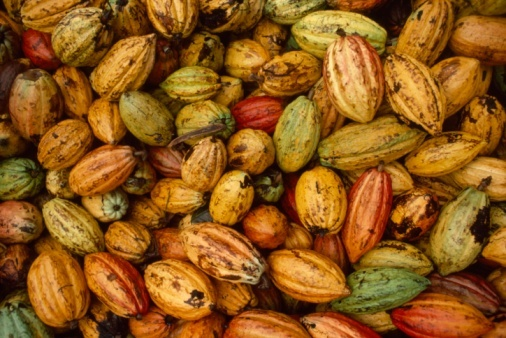 Cacao has been shown to elevate dopamine, a neurotransmitter that increases passion. Cacao has also been shown to elevate ser