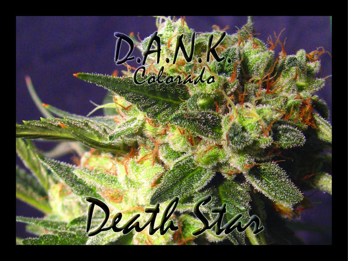 "Owner Justin Jones of Dank Colorado: ""Our Death Star [strain] has been really popular."""