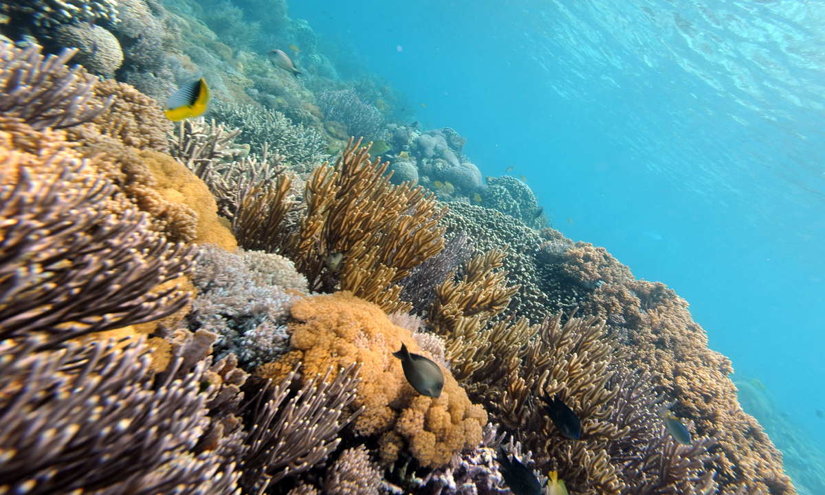 """Coral reefs formed <a href=""""http://coralreef.noaa.gov/aboutcorals/coral101/polypcolony/"""" target=""""_blank"""">240 million years ag"""