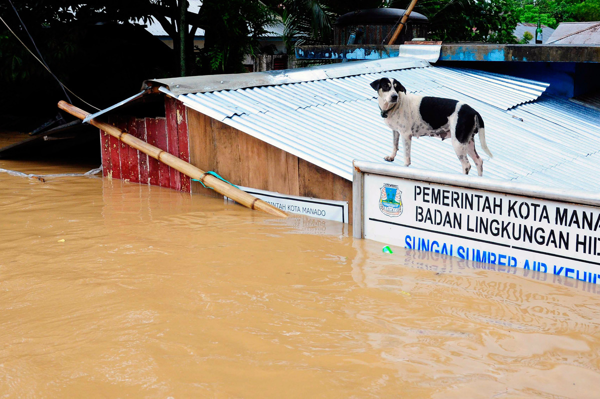 This picture, taken on January 15, 2014, shows a stranded dog standing on the roof of a house submerged by flooding in Manado