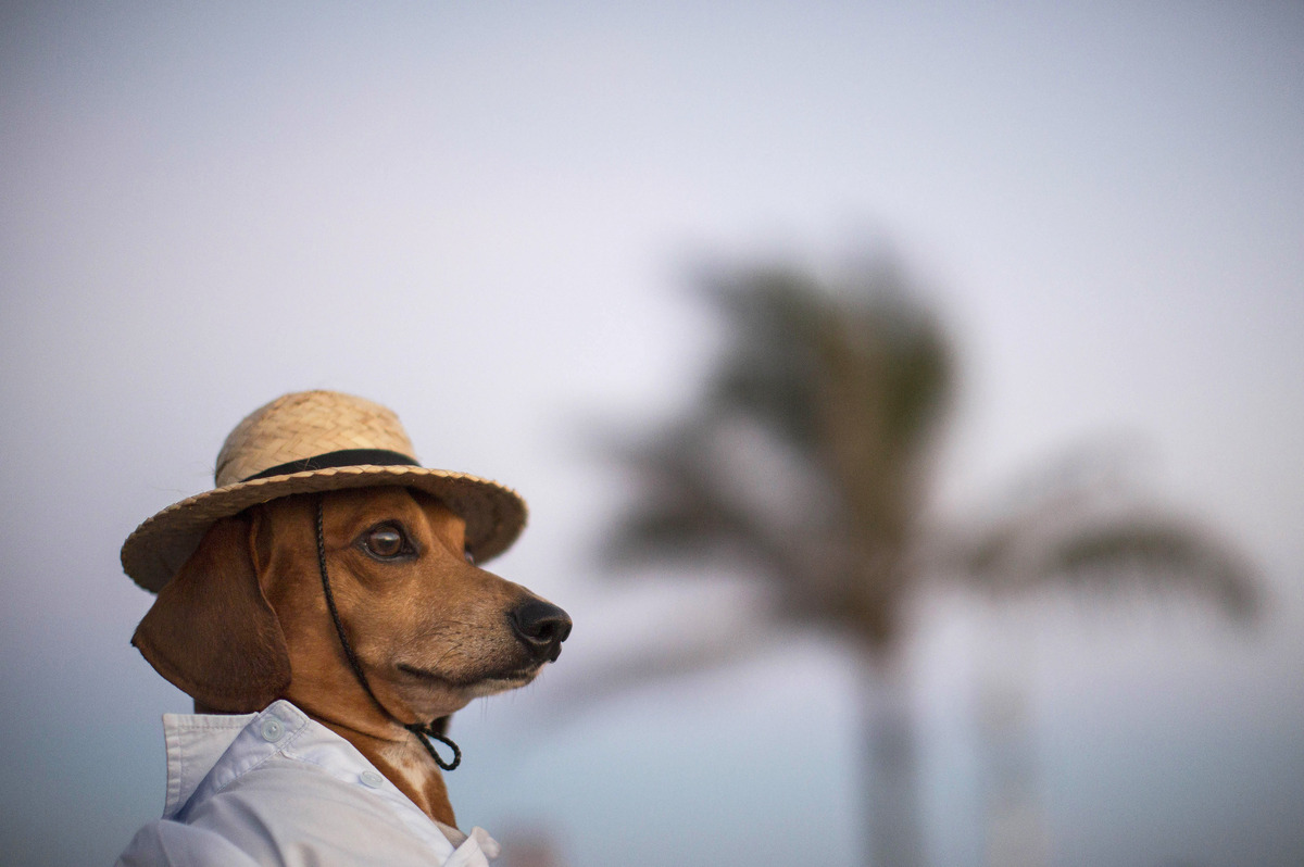 A dog named Caique wears a hat and shirt on Arpoador beach in Rio de Janeiro, Brazil, Saturday, Jan. 18, 2014. Caique's owner