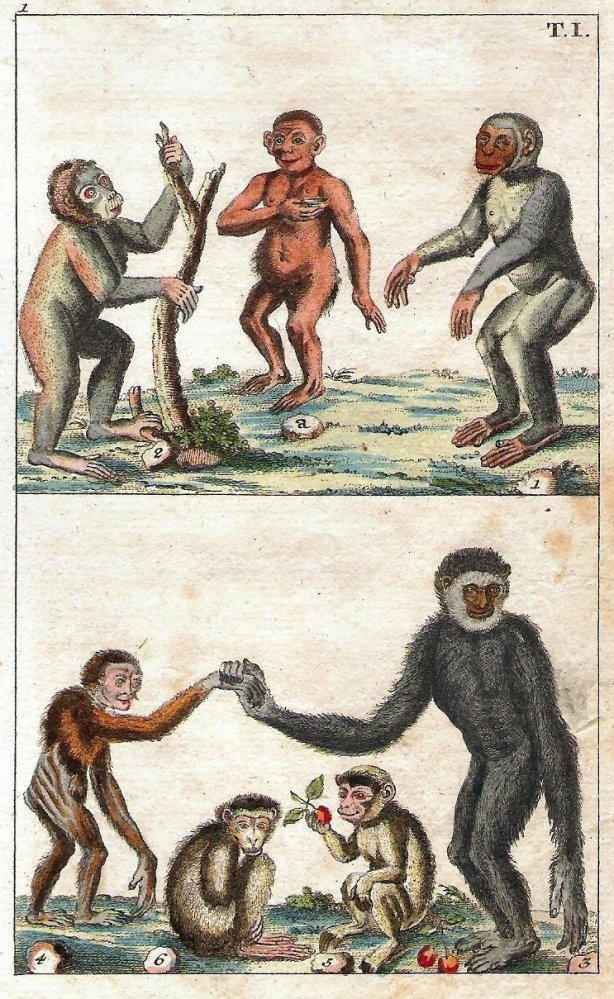 Primates, late eighteenth century. All of these figures have fairly simian bodies, but several have almost human heads. Their