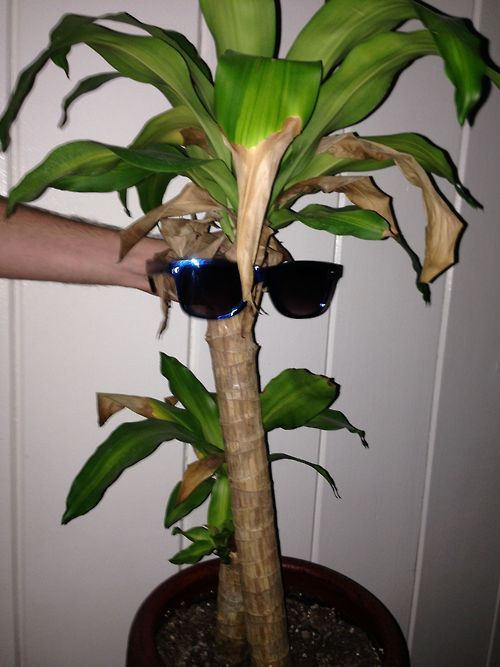"""Ugh,<a href=""""http://douchebagplants.tumblr.com/"""" target=""""_blank""""> these plants</a> think they're so cool."""