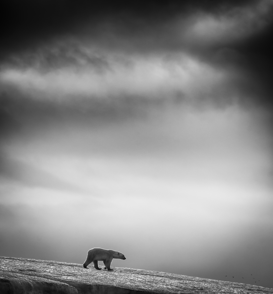"""<strong>Norway - Finalist Travel Professional Competition: </strong> """"This is a series of images in black & white taken at Sv"""