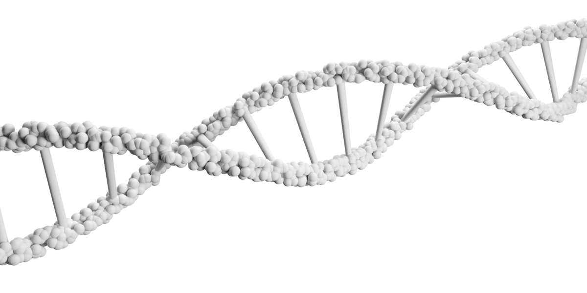 Why it's not true:   Although the gene sequence you were born with is fixed, gene expression depends on how you live your lif