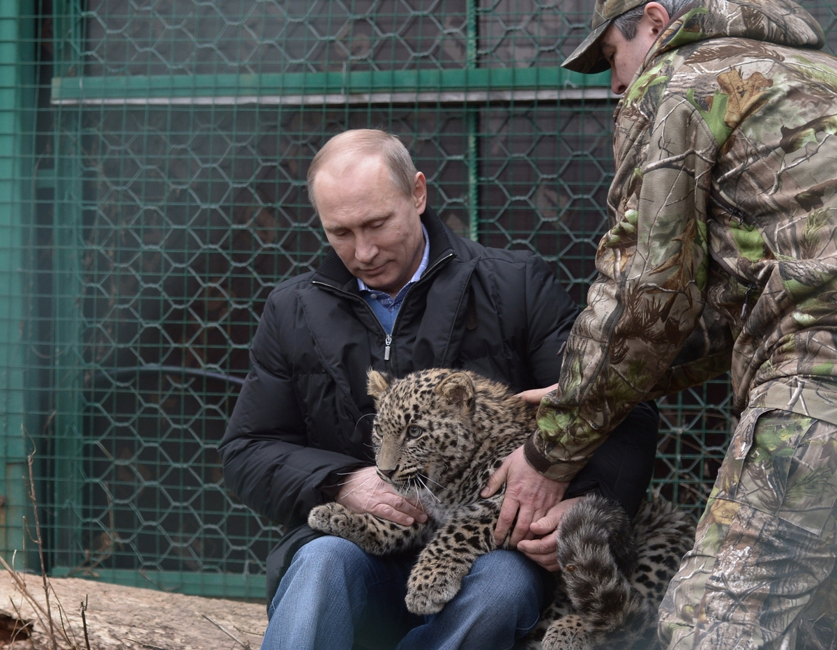 Russia's President Vladimir Putin caresses a Persian leopard cub as he visits the Persian leopard breeding and rehabilitation