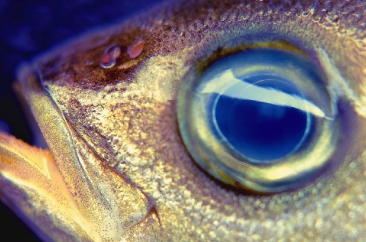 "<a href=""http://www.thedailymeal.com/7-reasons-eat-more-fish?utm_source=huffington%2Bpost&utm_medium=partner&utm_campaign=fre"