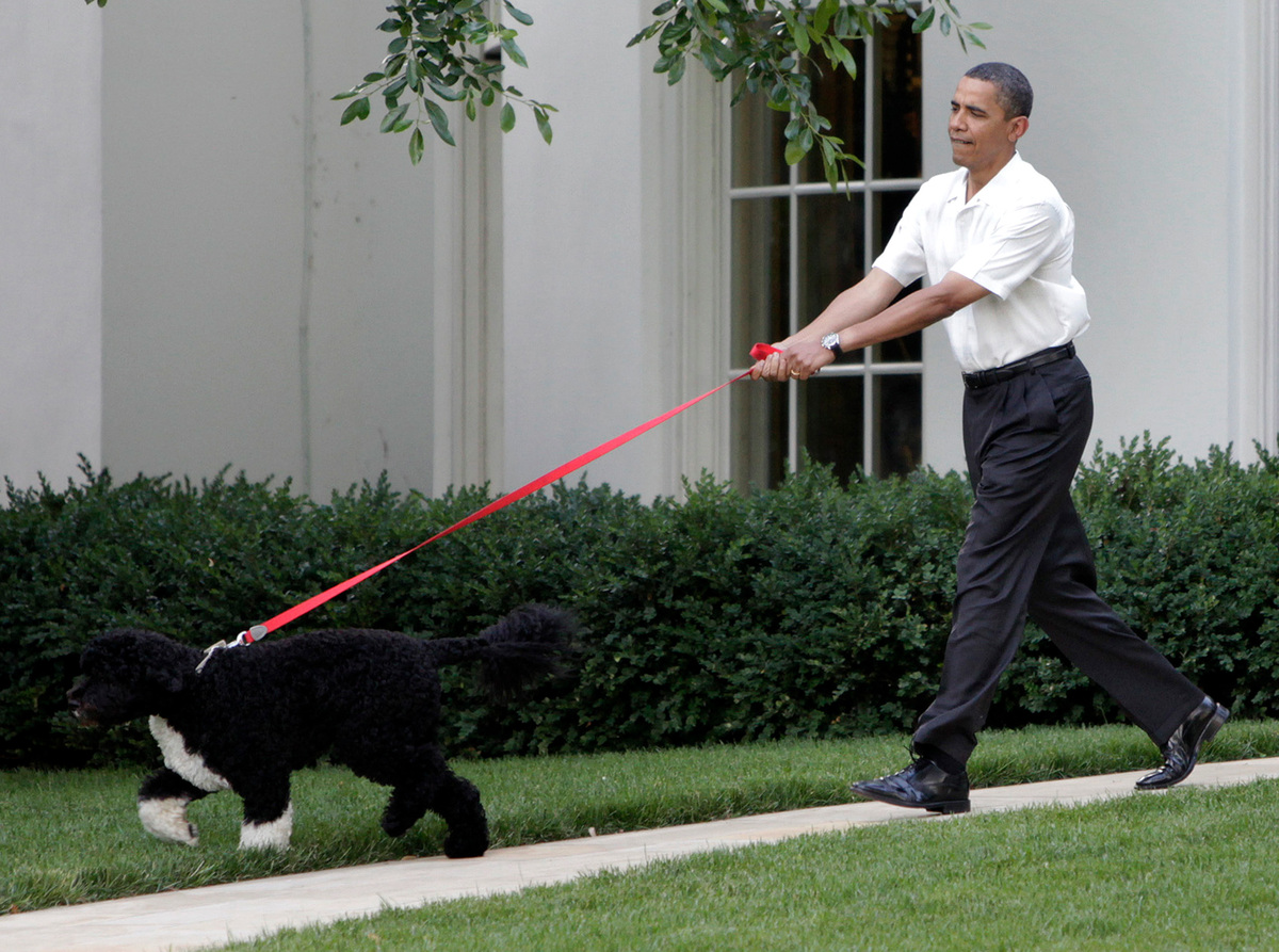 U.S. President Barack Obama walks the first family's dog as he arrives at the Congressional Picnic on the South Lawn of the W